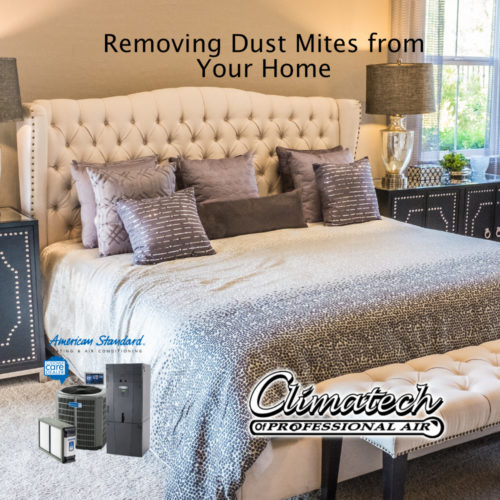 Removing Dust Mites from Your Home